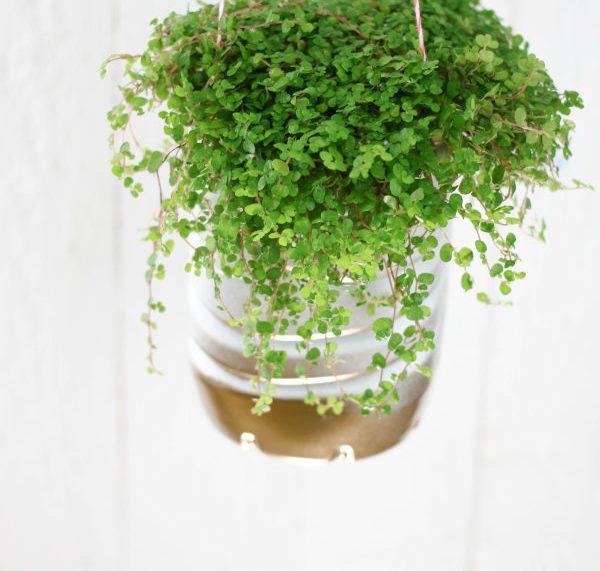 Do-it-yourself Hängeampel für Zimmerpflanzen aus einer alten Plastikflasche
