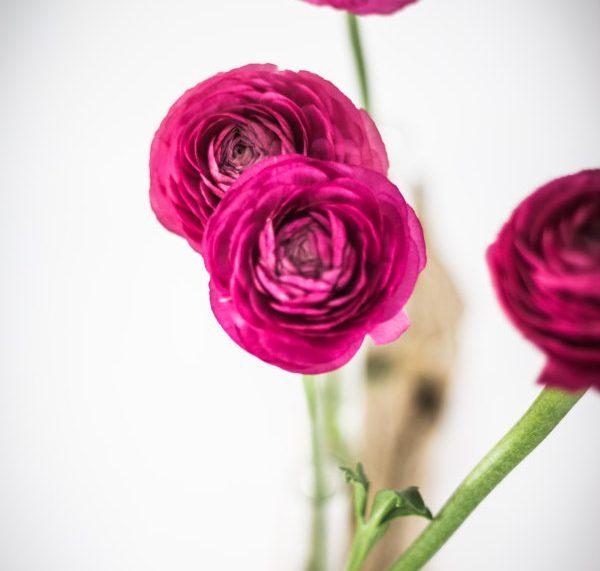 Ranunkeln in einer DIY Blumenvase