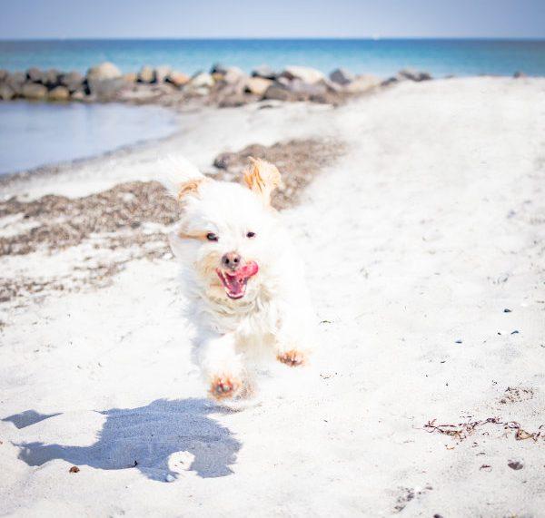 Happy Hasso am Strand