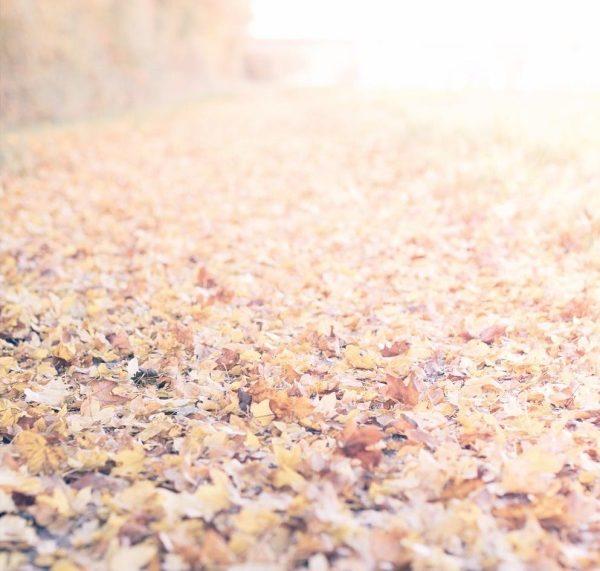Goldener Herbst by titatoni