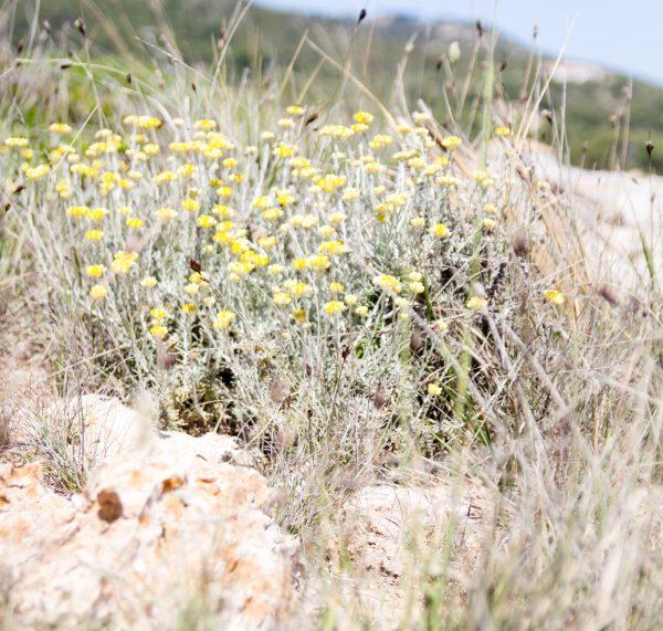 Natur auf Mallorca -  Rezept für einen traditionellen mallorquinischen Mandelkuchen by titatoni.de