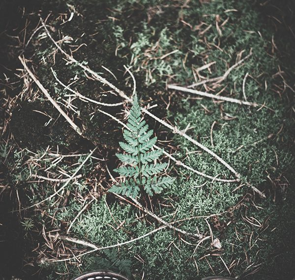 Kleine Glücksmomente im Wald. titatoni.de