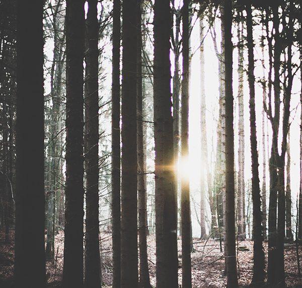 Mehr Achtsamkeit, weniger Stress, mehr Gelassenheit. Momente im Wald. titatoni.de